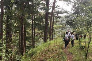 Du khách Hàn Quốc tử vong khi nhảy thác Datanla tại Đà Lạt