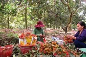 Trái cây sạch cho thị trường nội địa - Bài 2: Tạo uy tín khi xuất khẩu