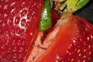 Người dân Australia hoang mang khi hàng loạt hoa quả bị găm kim khâu bên trong