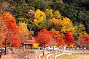 Những địa điểm check-in với lá phong tuyệt đẹp tại châu Á