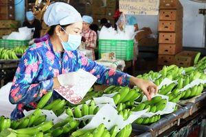 Trái cây sạch cho thị trường nội địa: Động lực phát triển thị trường