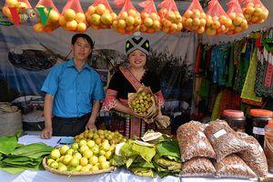 Chùm ảnh: Vùng cao Bắc Yên, Sơn La rộn ràng mùa táo chín