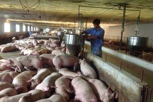 Kinh nghiệm phòng chống dịch tả lợn châu Phi của các nước