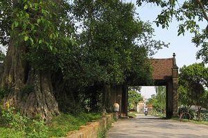 'Vị làng' Đường Lâm