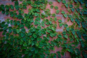 Lạ lùng loài cây mang tên động vật, trồng nhiều ở Việt Nam