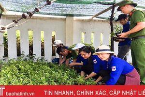 Vườn ươm cây giống của thanh niên Hà Tĩnh làm đẹp các miền quê