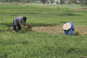 Hiệu quả kinh tế trong việc thực hiện chuyển đổi sản xuất ở vùng đất trũng thấp