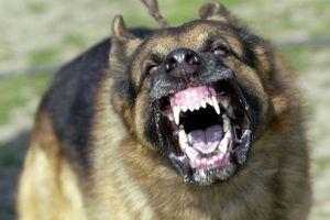 Điểm lại những vụ chó cắn chết người thương tâm tại Hà Nội