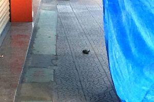 Đang làm rõ vật nghi lựu đạn đặt trước cửa hàng xe máy ở TP. Huế