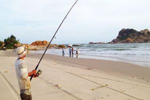 Bình Thuận: Ngày cá áp bờ, ăn dày, nơi nào cũng chật người câu