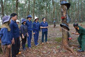 Rơ Mah Mrao 'huấn luyện' cạo mủ cao su