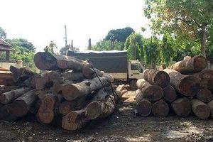 Thêm một cán bộ kiểm lâm bị bắt, liên quan đến trùm gỗ lậu Phượng 'râu'
