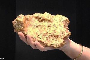 Bất ngờ đào được cục vàng nặng hơn 3kg, bán được 2,5 tỷ đồng