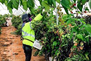 Australia: Hút lao động nhập cư