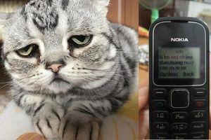 Đuổi vợ ra khỏi nhà rồi nhắn tin đòi mèo, anh chồng khiến dân tình đứng ngồi không yên