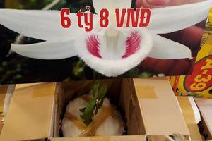 Sốc: Gốc lan Giã Hạc 5 cánh trắng được mua với giá gần 7 tỷ đồng
