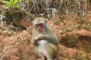 Khách vô tư cho khỉ ăn ở Sơn Trà