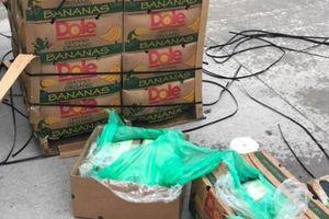 Mỹ: Mở thùng chuối, phát hiện 18 triệu USD cocaine