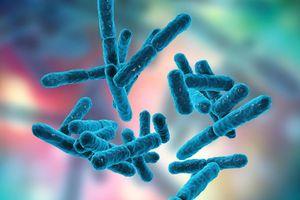 Lợi ích tuyệt vời của lợi khuẩn có thể bạn chưa biết