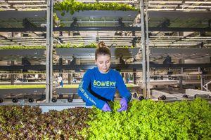 Khám phá nông trại công nghệ cao quản lý bởi trí tuệ nhân tạo