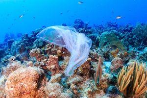 Những con số đáng báo động về rác thải nhựa