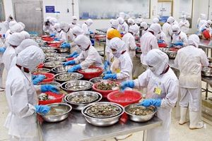 Vụ EU phạt thẻ vàng hải sản Việt Nam: Khó 'tẩy' thẻ