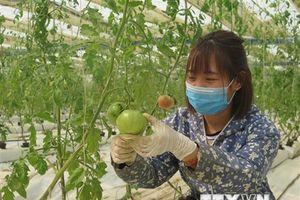Vì sao việc sản xuất nông nghiệp sạch vẫn còn 'chậm lớn'?