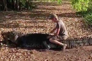 Clip: Khách du lịch liều lĩnh leo lên lưng cá sấu khổng lồ