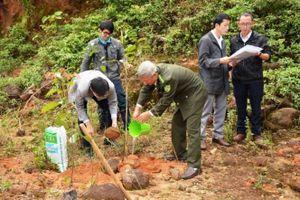 Đà Nẵng: Siết chặt quản lý rừng