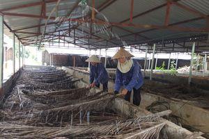 Trùn quế - nguồn hữu cơ cho chăn nuôi và trồng trọt