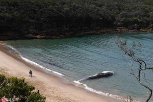 Cá voi khổng lồ chết dạt bờ, ngàn người ùn ùn kéo đến