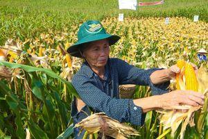 Nghịch lý thị trường thức ăn chăn nuôi