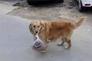 Chú chó mang giúp chủ nhân 3 kg thịt về nhà