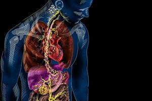 Chỉ mất vài giây để truyền tín hiệu từ ruột tới não