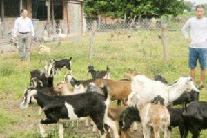 Trao vốn nuôi dê giúp dân mau có của ăn của để