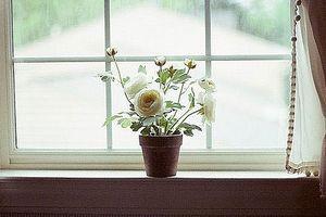 Khung cửa sổ thân thương