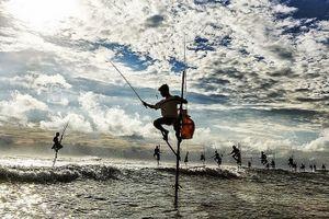 Nghệ thuật câu cá trên cọc kheo của các ngư dân Sri Lanka