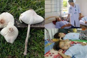 Cảnh báo: Không nên 'đánh cược' tính mạng với những loại nấm lạ ở rừng