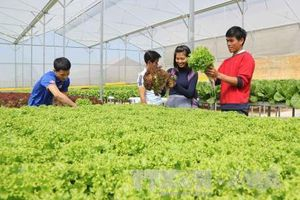 Thách thức về nông nghiệp sạch - Bài 2: Gỡ 'nút thắt' cho nông sản Việt