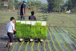Kế hoạch sản xuất ngành trồng trọt năm 2019