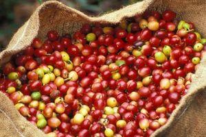 Giá nông sản hôm nay 28/9: Giá cà phê tiếp tục tăng nhẹ 100 đồng/kg, giá tiêu giữ 'phong độ'