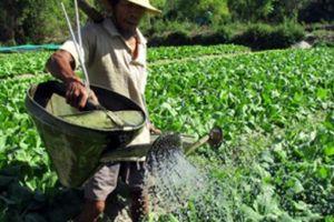 'Gắn sao' cho sản phẩm OCOP xứ Quảng
