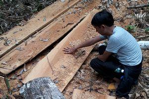Cơ quan chức năng vào cuộc vụ chặt phá 2,5ha rừng phòng hộ