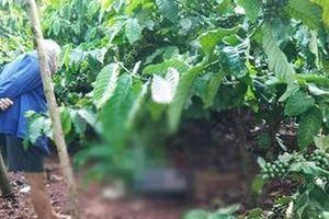 Đắk Lắk: Tá hỏa phát hiện thi thể người đàn ông trong rẫy cà phê