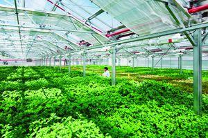TP.HCM sẽ có thêm 2 khu nông nghiệp công nghệ cao