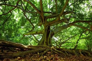 Xôn xao chuyện cây 'lạ' mọc lên từ xác người đàn ông mất tích 40 năm