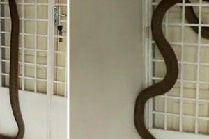 Muốn rắn không bò vào nhà hãy thử những cách này
