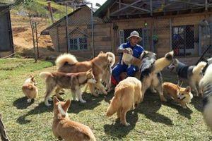 Thăm vườn có hơn 50 chú chó yêu 'dễ sợ' của đôi bạn trẻ Đà Lạt