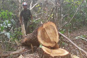 Khám nghiệm hiện trường vụ 'Tàn sát rừng phòng hộ'