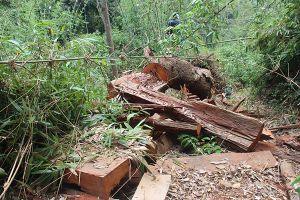 Khởi tố, bắt tạm giam 2 cán bộ kiểm lâm trong vụ phá rừng tại Quảng Nam
